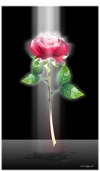 A Rose by William R Clegg
