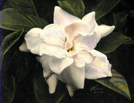 A Scent Of Gardenia by Angela Davies