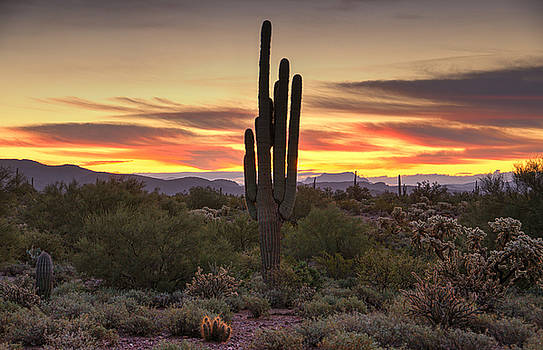 Saija  Lehtonen - A Serene Sonoran Morning