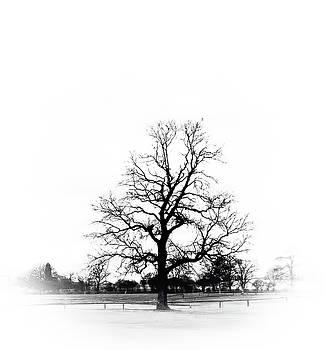 A simple tree by Paul Jarrett