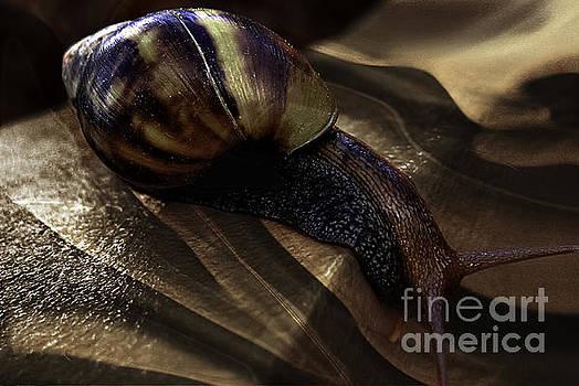 A Snail Progress by Daniela White