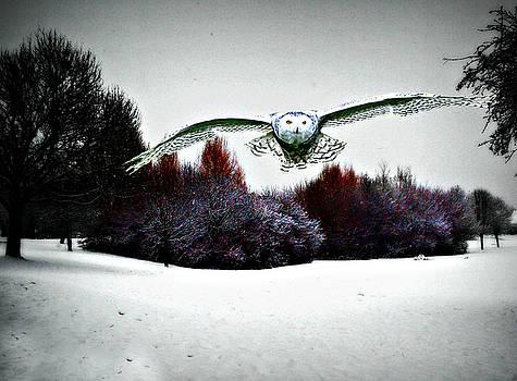 A Snowy Day by Bev Brown