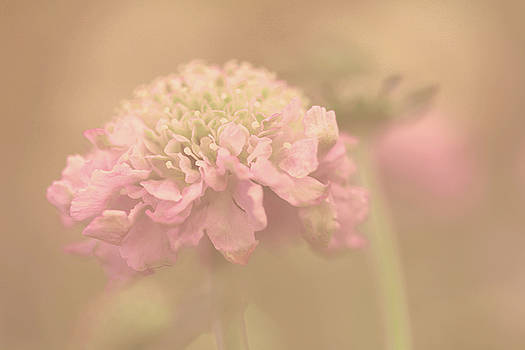 A Soft Touch  by Connie Handscomb