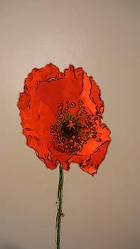 A solitary Poppy by Bobbie Barth