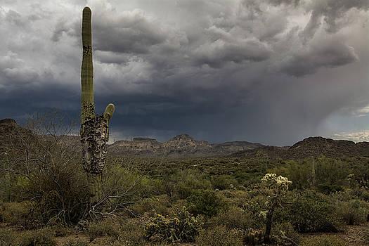 Saija Lehtonen - A Sonoran Sentinel