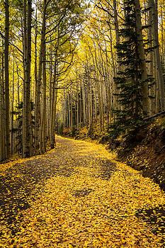 Saija  Lehtonen - A Stroll Among the Golden Aspens