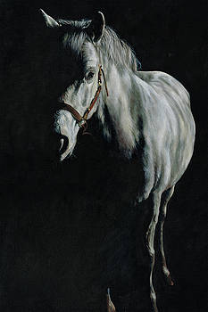 A Study of a Pony in the Shadows by Richard Mountford