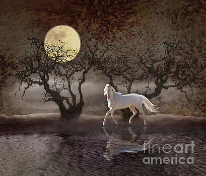 A Summer Night's Dream by Melinda Hughes-Berland