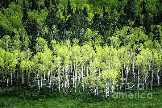A Thousand Shades of Green by The Forests Edge Photography - Diane Sandoval