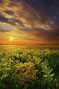 A Time of GIfts by Phil Koch