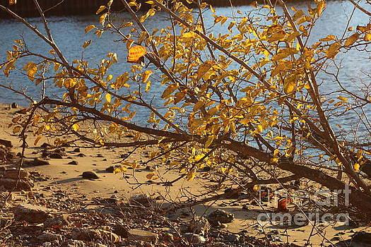 A Touch of Autumn by Dora Sofia Caputo Photographic Art and Design