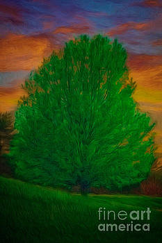 A Tree At Sunset by Tom York Images
