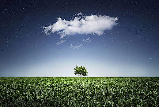 A tree covered with cloud by Bess Hamiti