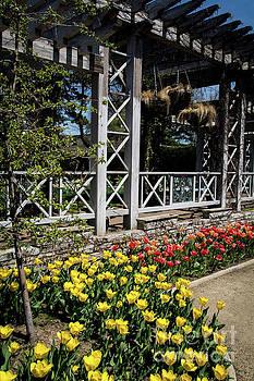 A Tulip Garden by Deborah Klubertanz