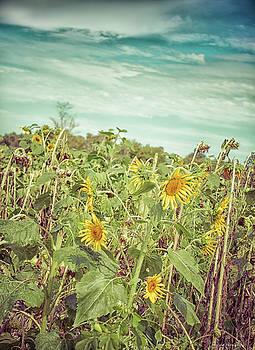 A Twist Of Sunflowers by Debra Forand