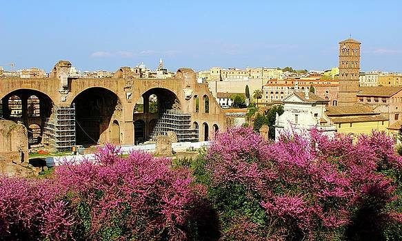 A View in Rome by Janice Aponte