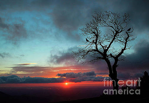 A Virginia Kind of Sunrise by Darren Fisher