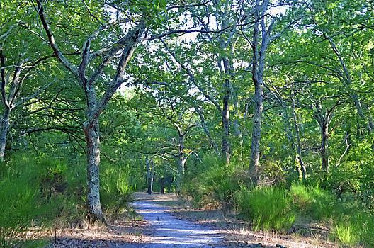 A Walk in the Woods by Bishopston Fine Art