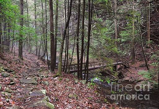 A Walk in the Woods by Debbie Green