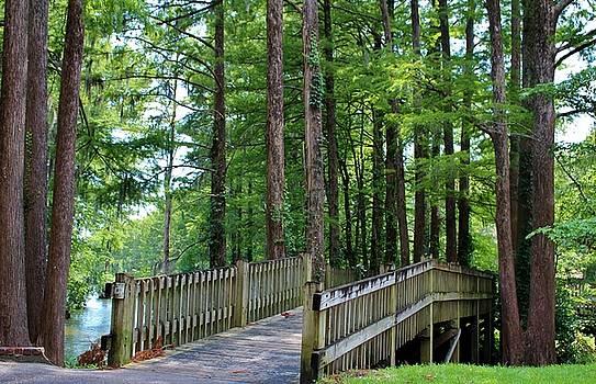 A Walk Over The Lake by Cynthia Guinn