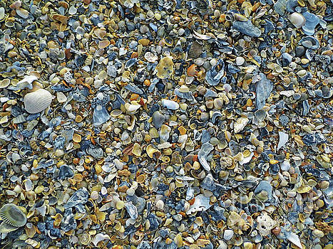 A Whole Lot Of Shells by D Hackett