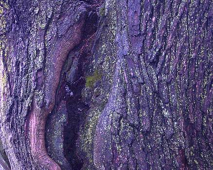 Abstract Bark 5 by Anna Villarreal Garbis