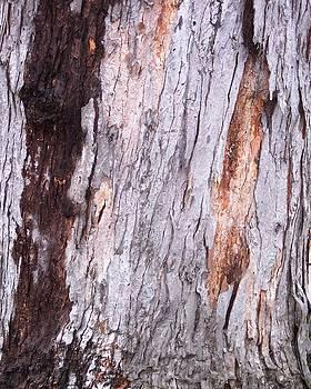 Abstract Bark 7 by Anna Villarreal Garbis