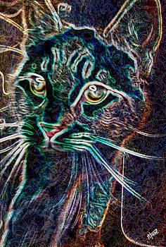 Abstract Cat by Alejandro Tovar