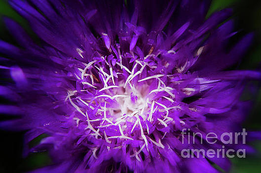 Abstract Flower Nature Photograph by Melissa Fague