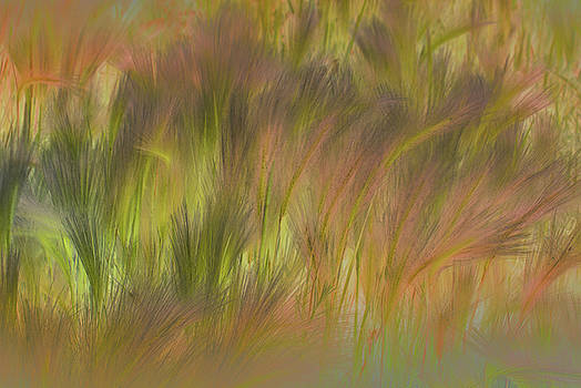 Abstract Grasses by Ron Hoggard