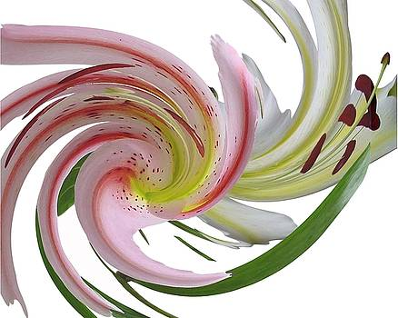 Abstract Lily by Carol Phipps