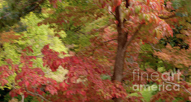 Abstract of Autumn by Iris Greenwell