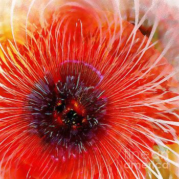 Abstract Poppy by Klara Acel