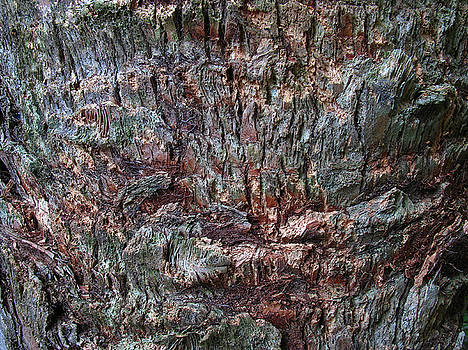 Juergen Roth - Abstract Tree Bark