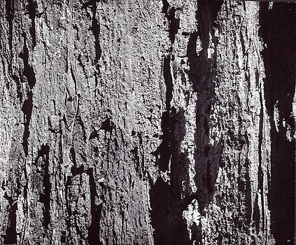 Abstract Treebark by Steven Huszar