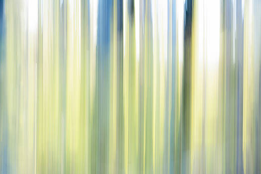 Abstract Trees in Spring by Marion McCristall