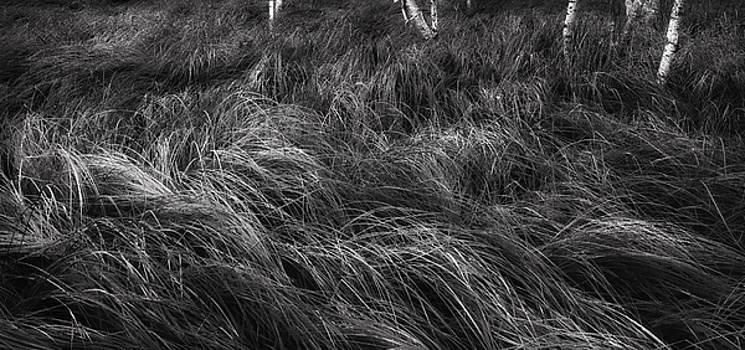 Thomas Schoeller - Abstract Waves of Grass - Sieur de Monts Woodlands