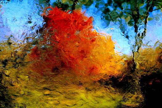 Abstracts of Autumn Canopies 2 by Charles Shedd