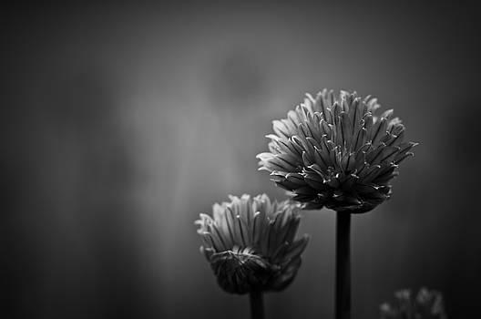 Abundantia by Matthew Blum