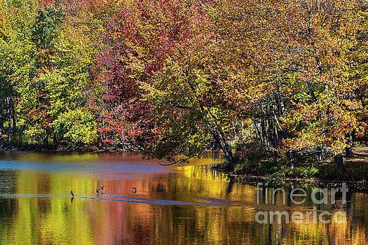 Adirondack Autumn by John Greim