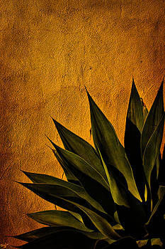Chris Lord - Adobe and Agave at Sundown