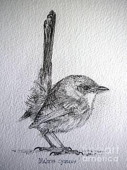 Adolescent Blue Wren by Sandra Phryce-Jones