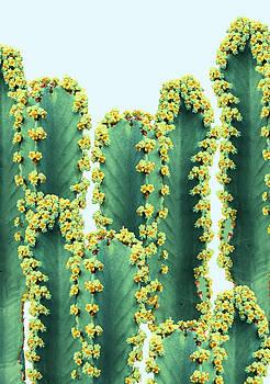 Adorned Cactus by Uma Gokhale