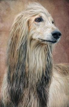 Afghan blonde by Claudia Moeckel