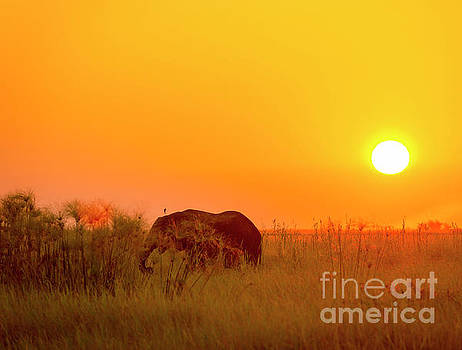 Africa Background by Tim Hester