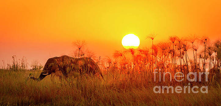 Africa Elephant Background by Tim Hester