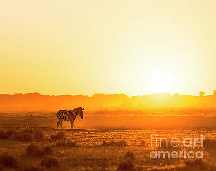 Tim Hester - Africa Sunset Landscape