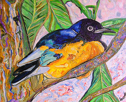 African blue eared starling by Heather Lennox