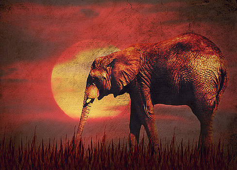 Angela Doelling AD DESIGN Photo and PhotoArt - African elephant