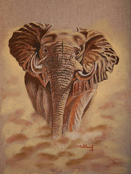African Elephant by Charles Hubbard